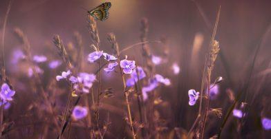flowers-402094_1920